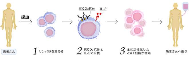 アルファ・ベータT細胞療法(αβT細胞療法)